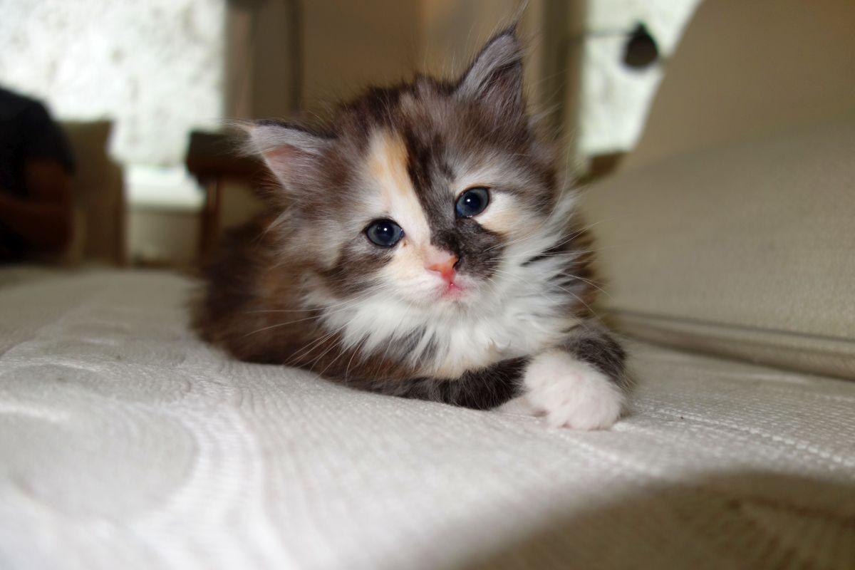 Little Lucie