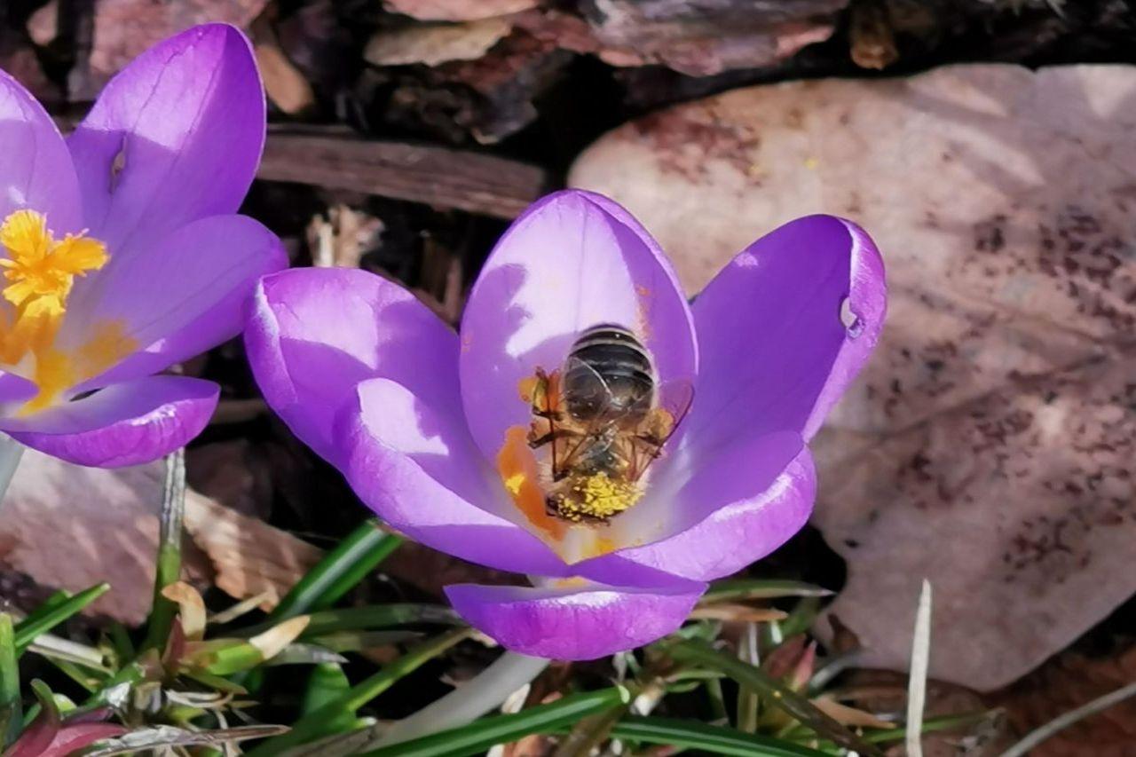 Ein fleißiges Bienchen