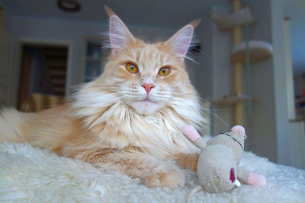 Katzenzucht